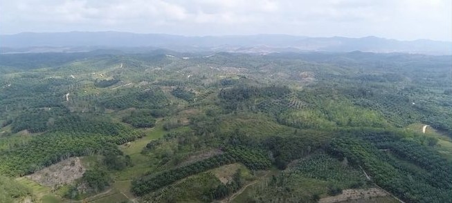 Indonesia's decision to move capital to Borneo raises concerns
